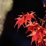 岡崎市の観光と紅葉(東公園)