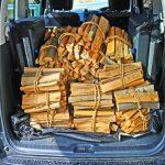 大量の薪を確保できました。ついでにキャンプ地候補も見つけたよ
