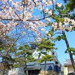 岡崎城から乙川沿いの桜を撮影してきました(動画もあるよ)